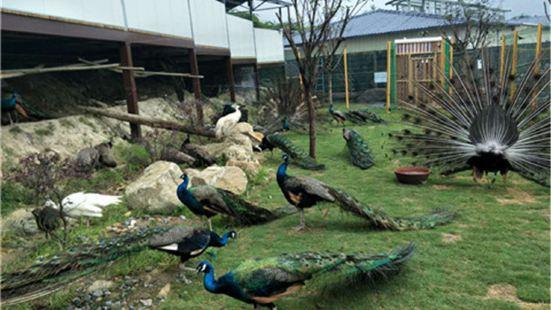 Xiaochipeixie Mengchong Zoo