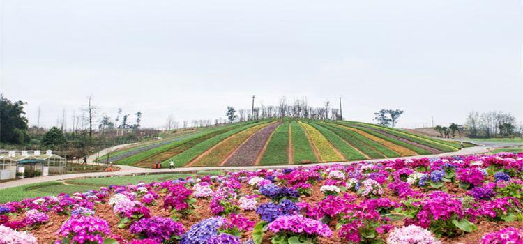 Xinglong Sea of Flowers1