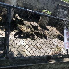 푸껫 동물원 여행 사진