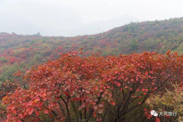 河南最美的紅葉已經到來,你值得專程來一趟少林寺
