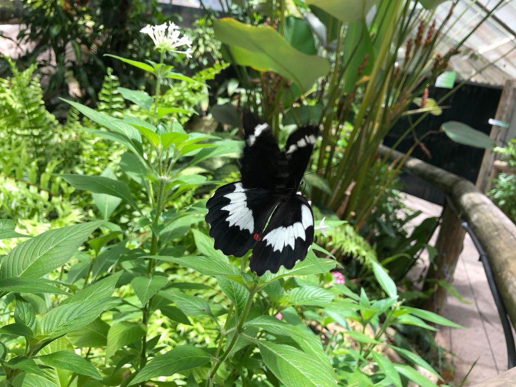 Australian Butterfly Sanctuary Tickets Deals Reviews