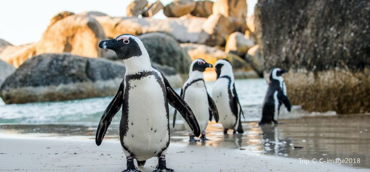 Boulders Penguin Colony2