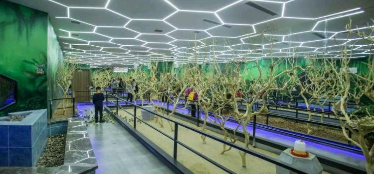 Future Zoo未來動物城(杭州大悅城店)