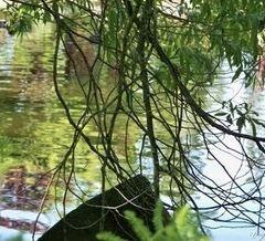 Queen's Park User Photo