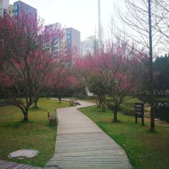 Binhu Park User Photo