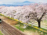 超全!2019國內外櫻花觀賞指南,赴一場粉色的約會!