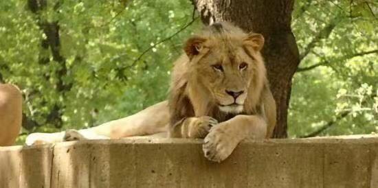 國家動物園
