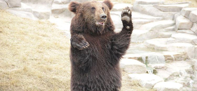 西伯利亞棕熊展區1