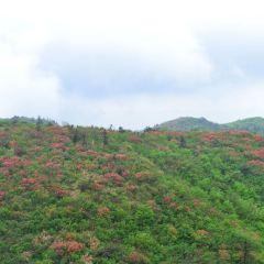 梅嶺國家級風景名勝區用戶圖片