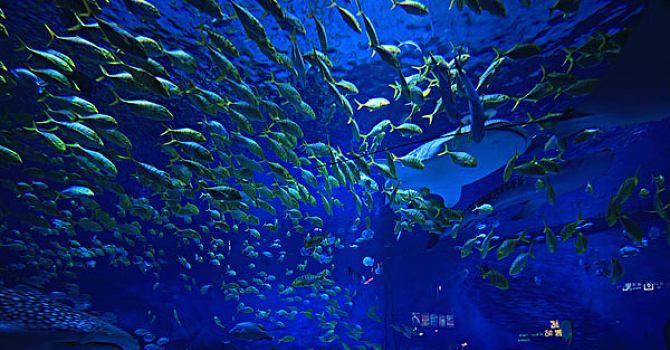 옌타이 하이창 고래&상어 해양공원2