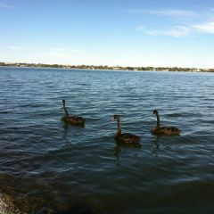 Swan River 여행 사진