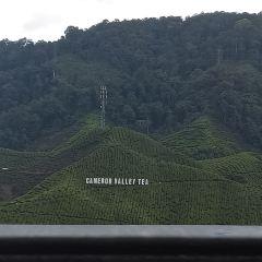 Tanah Rata Cameron Valley茶園用戶圖片