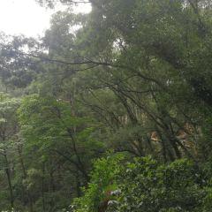 Sanmenjiang National Forest Park User Photo
