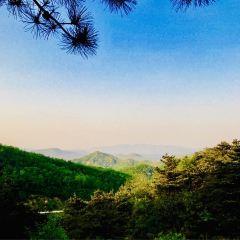 臨朐黑松林用戶圖片