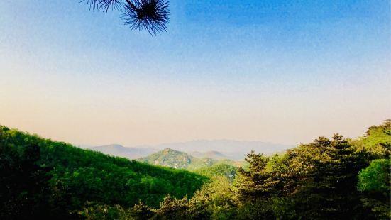 臨朐黑松林