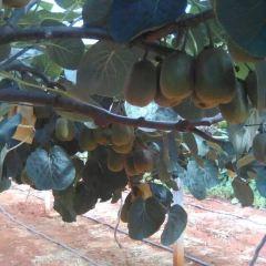 綠康原生態果園用戶圖片