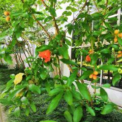 Boracay Butterfly Garden User Photo