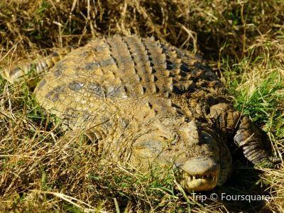 Kalimba Reptile Park
