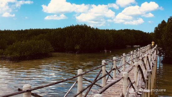 Omagieca Mangrove Garden