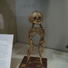 馬特博物館用戶圖片