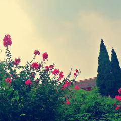 Yinxu Palace & Temple Historic Site User Photo