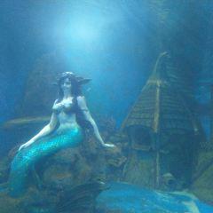 Fantasy Aquarium User Photo