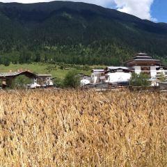 魯朗鎮用戶圖片
