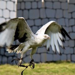 Hawk Conservancy Trust用戶圖片