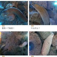 Shunyinghaiyang World User Photo