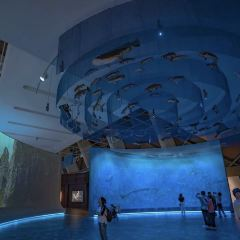 Ozeaneum User Photo
