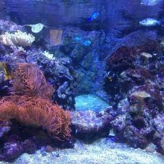 Acquario civico User Photo