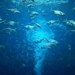 亞特蘭蒂斯水世界用戶圖片