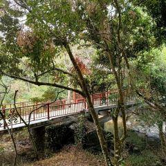 五指山熱帯雨林風景区のユーザー投稿写真