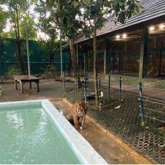Tiger Kingdom Phuket User Photo