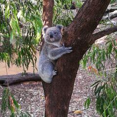 Perth Zoo 여행 사진
