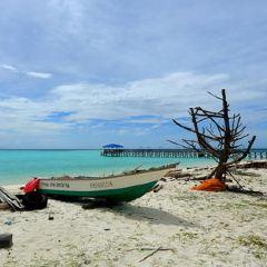 美人魚島用戶圖片