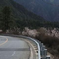 嘎拉桃花村用戶圖片