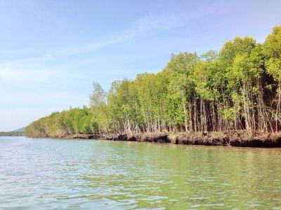 紅樹林生態保護區
