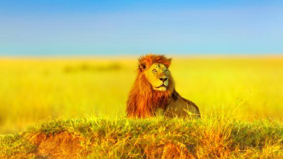 馬賽馬拉國家保護區