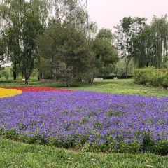 Jiangtai Binhe Park (West Gate) User Photo