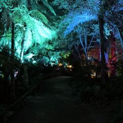 Pukekura Park User Photo