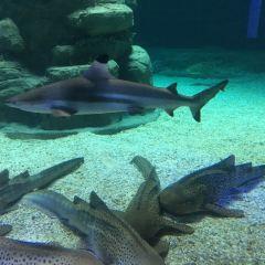 Shark Mystique User Photo