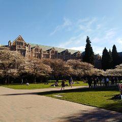 University of Washington User Photo