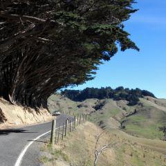 Otago Peninsula User Photo