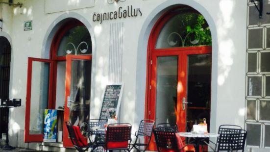 Cajnica Gallus