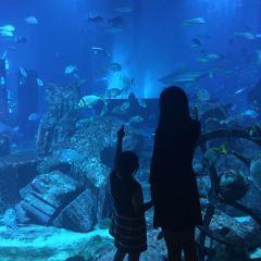 Atlantis, The Palm Island User Photo