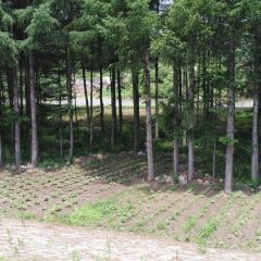 江桃山森林公園用戶圖片