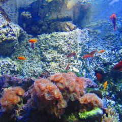 Underwater World SEA LIFE Aquarium Mooloolaba User Photo