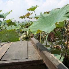 White Pagoda Park User Photo