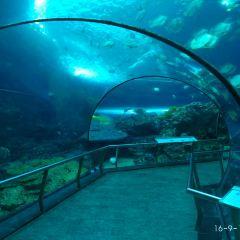 Museum of Marine Biology and Aquarium User Photo